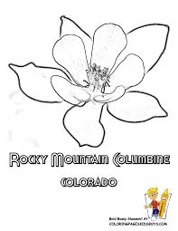 State Flower Of Colorado - states flower coloring sheets alabama georgia free flower