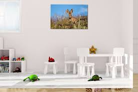 spring rabbit rogue aurora photography wildlife nature wall art print of a spring rabbit at yuba lake in utah hung in