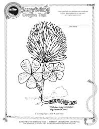 free coloring page flowers big headed clover surviving the