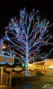 dollywood adds the parade of many colors wildgravity travels