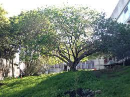 The Urban Garden Meadow Mind Cultivating The Urban Garden Genine Lentine