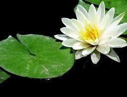 imagenes zen gratis lotus zen meditación foto gratis en pixabay