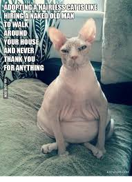 Ugly Cat Meme - 25 best memes about ugly hairless cats ugly hairless cats memes