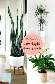 best low light indoor trees indoor houseplants best for health that purify air near me laneige