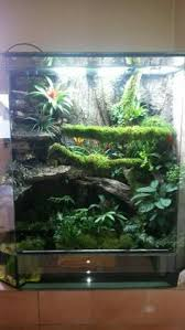 one of my crested gecko tanks an exo terra small tall 18x18x24