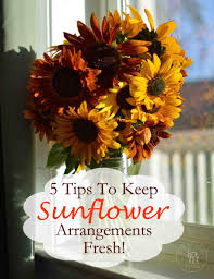 Fresh Cut Flower Preservative by 5 Tips On How To Keep Sunflowers Alive And Fresh