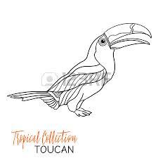 toucan tropical bird vector illustration coloring book for