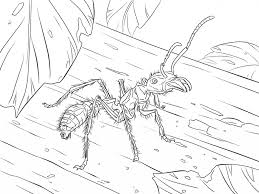 bullet ant download animal free download ants coloring pages