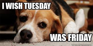 Happy Tuesday Meme - shaylee s dogs on twitter happy tuesday from tracksieandtig