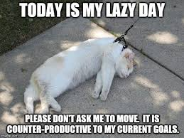 Lazy Day Meme - lazy cat imgflip