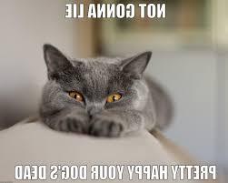 Sassy Cat Meme - nyan sassy cat quickmeme photograph related to marvelous dead cat meme