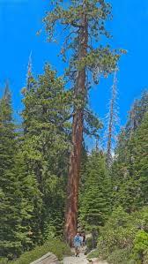 Hiking Maps 25 Best Yosemite Glacier Point Hiking Maps Images On Pinterest