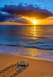 Amazing Pictures Of Nature by Best 25 Summer Nature Photography Ideas On Pinterest Sunset