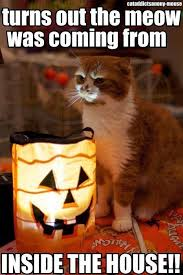 Happy Halloween Meme - happier than a pig in mud lol cats for a happy halloween