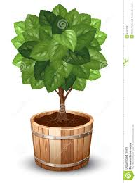 tree in tub stock vector image of asia agriculture 41603147
