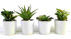 four indoor plants every woman is fond of interior office loversiq