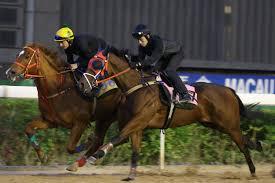 Macau Jockey Club Trackwork Photo Realesa