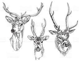 set of hand drawn deer heads vector illustration stock vector art
