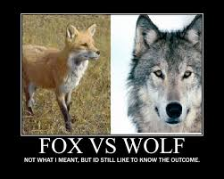 Wolf Memes - fox vs wolf by mememaster21 on deviantart