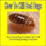 Powder That Kills Bed Bugs Powder That Kills Bed Bugs Bed Bug Denver