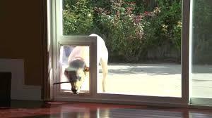 Patio Sliding Glass Door Danjo Patio Sliding Door With Built In Pet Access They Design