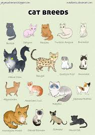 Barn Cat Names American Bobtail Cat Breeds And Information Deviantart Cat And