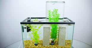 Bill Gates Aquarium In House by It U0027s Not An Impossible Fish Tank It U0027s Just Physics Wired