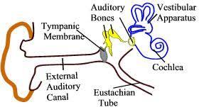 sense organs worksheet test paper
