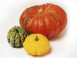 the best types of squash and pumpkins for containers hgtv