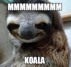 Meme Generator Koala - meme maker mmmmmmmmm koala