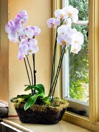 beautiful house plants tips for beautiful indoor plants orchid care interior design
