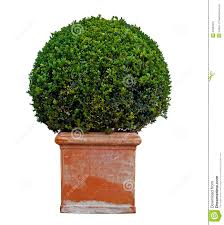 potted plant royalty free stock image image 21882676