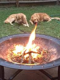 Dog Cooking Meme - fire breathing dog perfectly timed photos know your meme