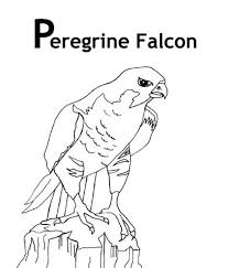 peregrine falcon bird coloring pages animal coloring pages of