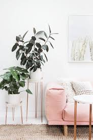 best indoor plants for apartments best indoor plants 8 indoor