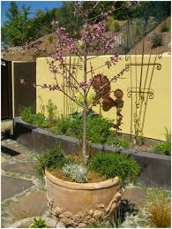 backyards fascinating limb up evergreen shrubs for small trees