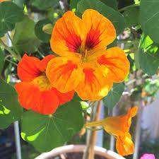 chambre d hote l ile rousse plante interieure fleurie pour chambre d hote ile rousse nouveau les