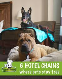 state with most dog owners 2016 petsstayfree png