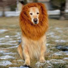 halloween costumes for dogs cosplay lion mane wig pet dogs