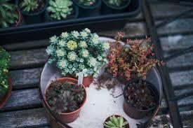 diy labels for pots u0026 plants with studio 614 columbus dispatch