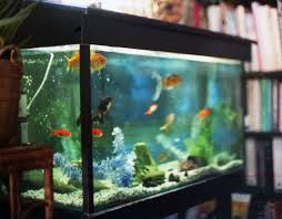Interesting  Home Aquarium Designs Decorating Design Of Best - Home aquarium designs