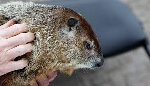 groundhog 2017 groundhogs raleigh garner ready