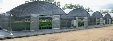 Buy A Greenhouse For Backyard Growing Marijuana In A Greenhouse