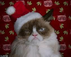 Grumpy Cat Memes Christmas - grumpy cat christmas memes imgflip