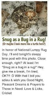 Bug Na Rug Bugs In A Rug Rugs Ideas