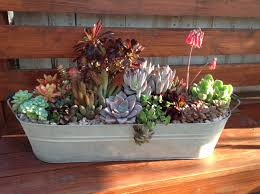 chicweed in solana beach ca everything succulent pinterest