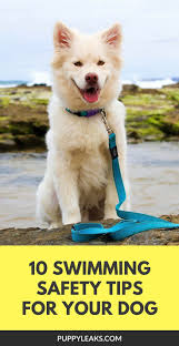 Overstock Com Pets 3018 Best Dogs Pet Survival Images On Pinterest Animals Puppy