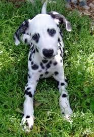 breeds dogs 3 weeks imgur