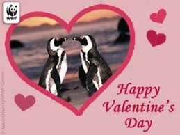 world wildlife fund animal e cards board happy s day