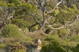south australian native plants australian wildlife conservancy